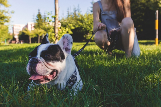5 Ways Pets Make Us Healthier People