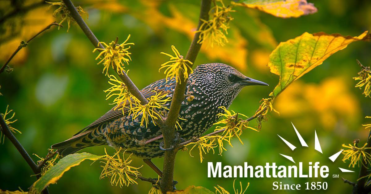 The Brilliant Life of Birding (Bird Watching)